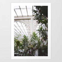 Botanic Gardens Art Print