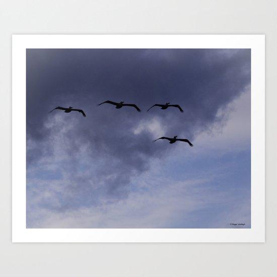 Four Pelicans Art Print