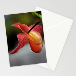 Paphiopedilum Orchid Stationery Cards