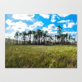 Cypress Trees and Blue Skies Canvas Print