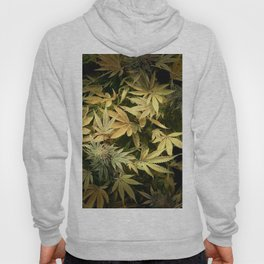 Yellow Cannabis Family Hoody