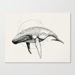 'Wildlife Analysis VII' Canvas Print
