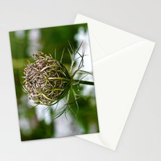 Wild Carrot Stationery Cards