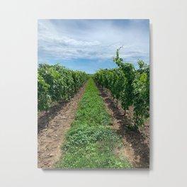 Winery Vineyard 2 Metal Print