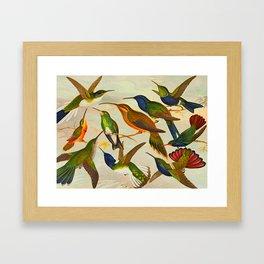 Translate Album de aves amazonicas - Emil August Göldi - 1900 Colorful Hummingbirds Framed Art Print