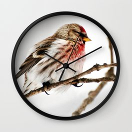 Common Redpoll Bird Wall Clock