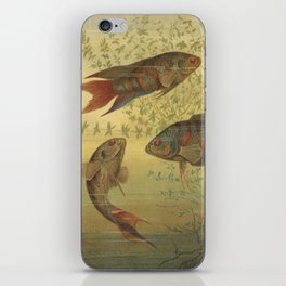 Paradise Fish Scene from 1887 Lithograph (Macropodus Viridi Auratus) iPhone Skin