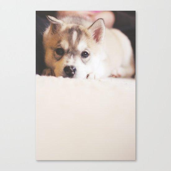 "siberian husky puppy - ""nova"" Canvas Print"