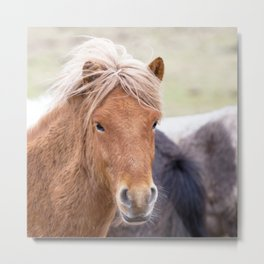 Watercolor Horse 02, Icelandic Pony, Kufhol, Iceland, Strawberry Blond Metal Print