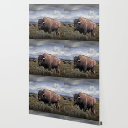 American Buffalo or Bison in the Grand Teton National Park Wallpaper