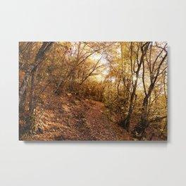 oak forest  Metal Print