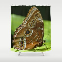 Beautiful Butterfly Wings of Meadow Brown Shower Curtain