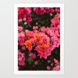 California Blooms XI Art Print