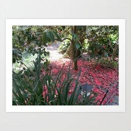 Camelia - End of Blossom Art Print