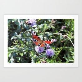 Sweet butterfly Art Print