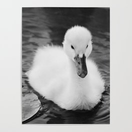 """Baby Swan - Black & White"" Poster"