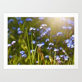 Forget me not flowers in sunlight Art Print