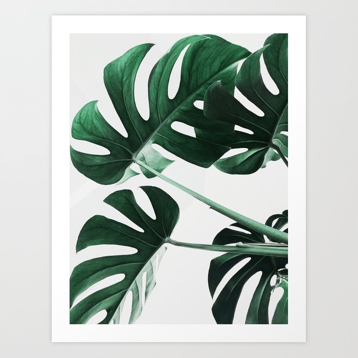 Monstera, Leaves, Plant, Green, Scandinavian, Minimal, Modern, Wall art Kunstdrucke
