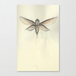Moth [[ 2 ]] Canvas Print
