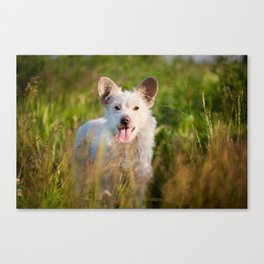 Single white stray tyke dog at the meadow Canvas Print