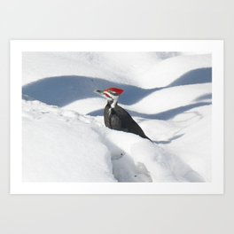 Snowbird! Art Print