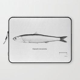 Engraulis encrasicolus Laptop Sleeve