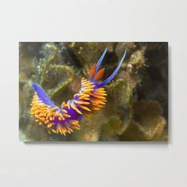 Spanish Shawl Nudibranch Metal Print