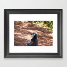 Lemur Catta III Framed Art Print