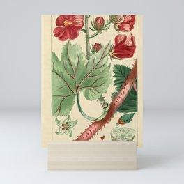 Flower ketmie tachee a saveur d oseille (Fr)13 Mini Art Print
