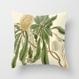 Banksia integrifolia (Coast Banksia) 1827 Throw Pillow