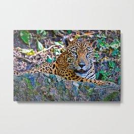 Jaguar Guatemala Metal Print