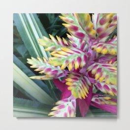 Blooming Bromeliad Metal Print