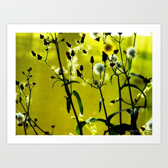 Kissed by the Sun 2 Art Print
