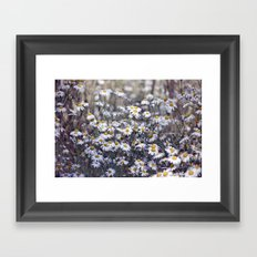 Wild Daisies Field 4130 Framed Art Print