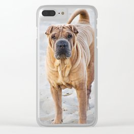 Shar Pei dog standing on the beach Clear iPhone Case
