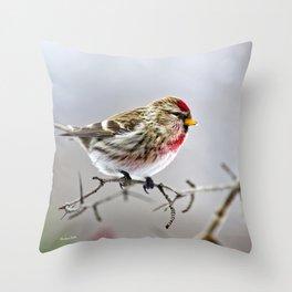 Winter Redpoll Bird Throw Pillow