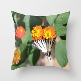 Scarce Swallowtail Butterfly Throw Pillow