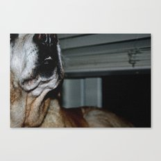 Lost in the turkey neck, looking for love Canvas Print