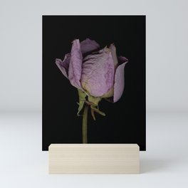 Alpha Mini Art Print