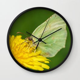 Brimstone Butterfly Wall Clock