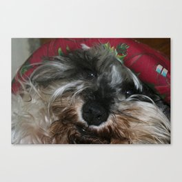 Adorable dog looking forward to Xmas theme portrait Canvas Print