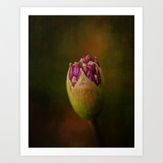Allium in May Art Print