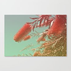 Red Fluffy Plant Canvas Print