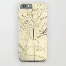 Flower justicia venusta24 iPhone Case