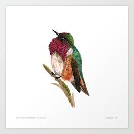 Wine-throated Hummingbird Art Print