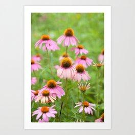 Pink Echinacea Wildflower Art Print