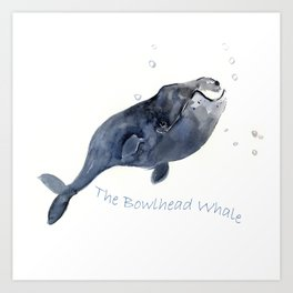 Bowlhead Whale Art Print