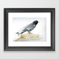 Australian Starling Framed Art Print