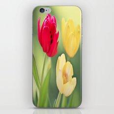 Red & Yellow Tulips iPhone & iPod Skin