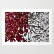 Same Tree-Different Season Art Print